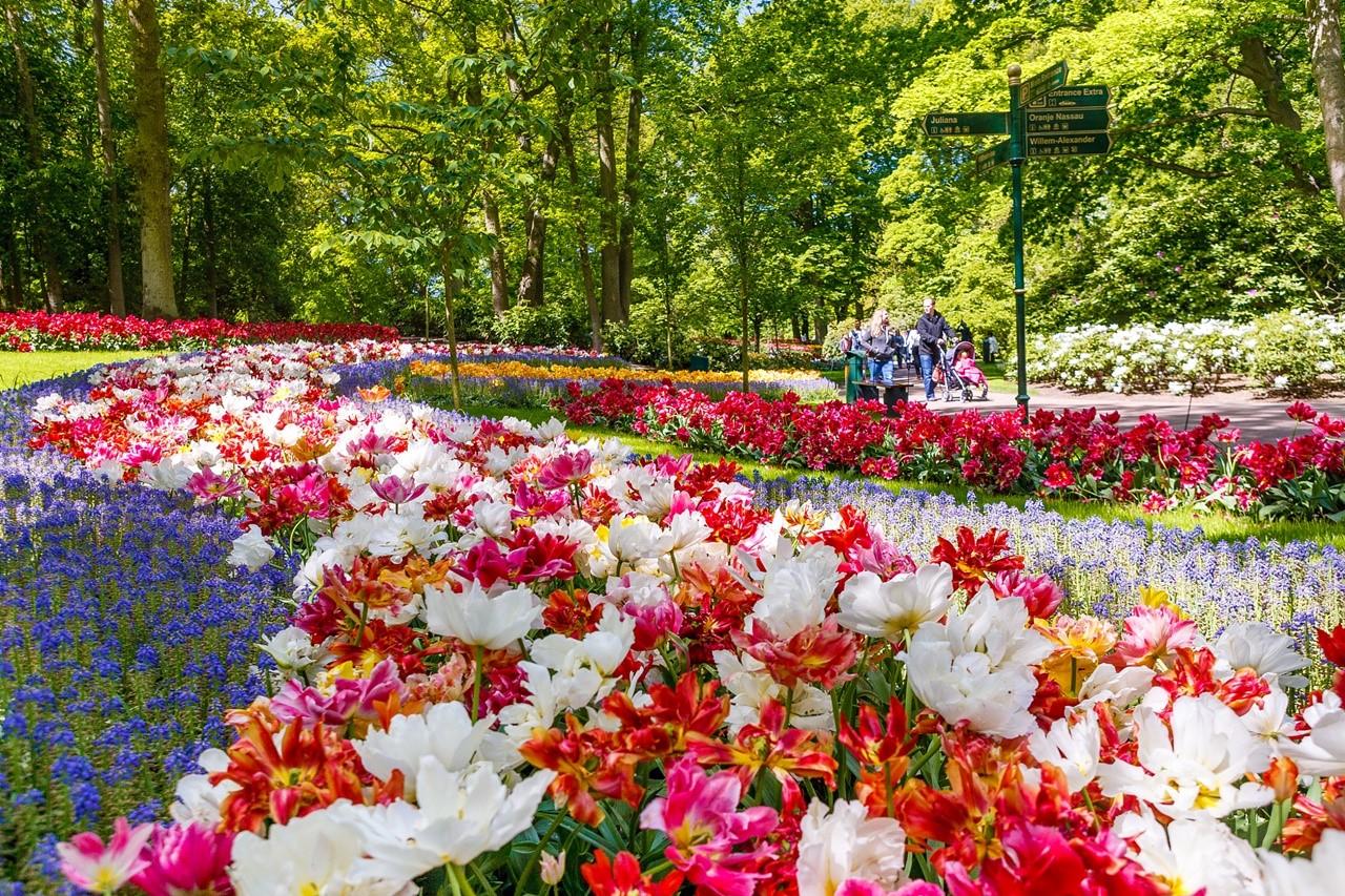 Hà Lan quá đỗi thơ mộng và yên bình!